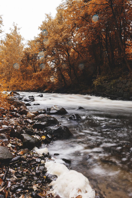 Autumn009