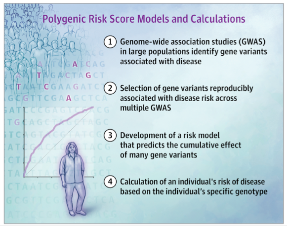 Polygenic Risk Models and Calculations.png