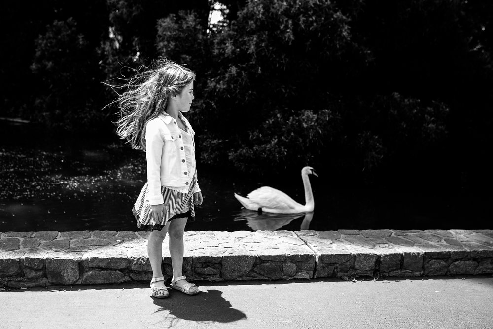 bw-a-swan.jpg