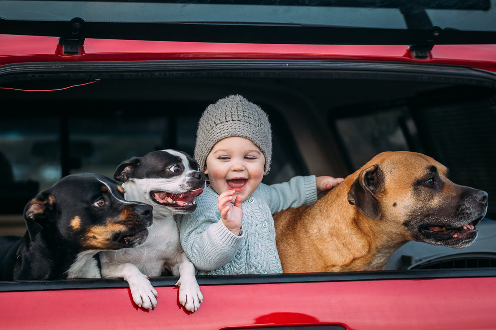 one year old baby girl in the back of a pickup truck smiling with her dogs {Bay Area Child Photographer}