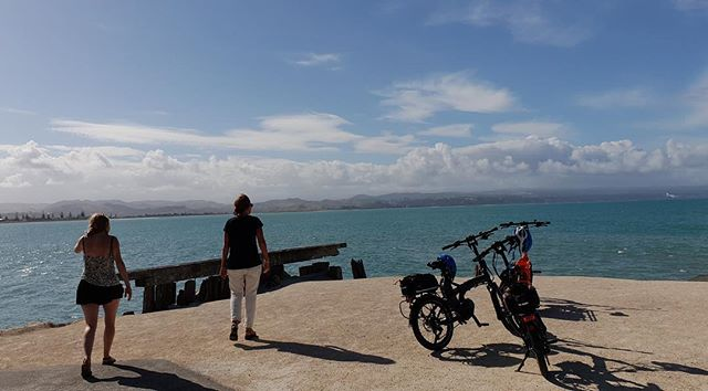 Explore Napier by E-bike. #ebikestyle