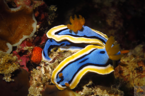 HouseReef1.PNG