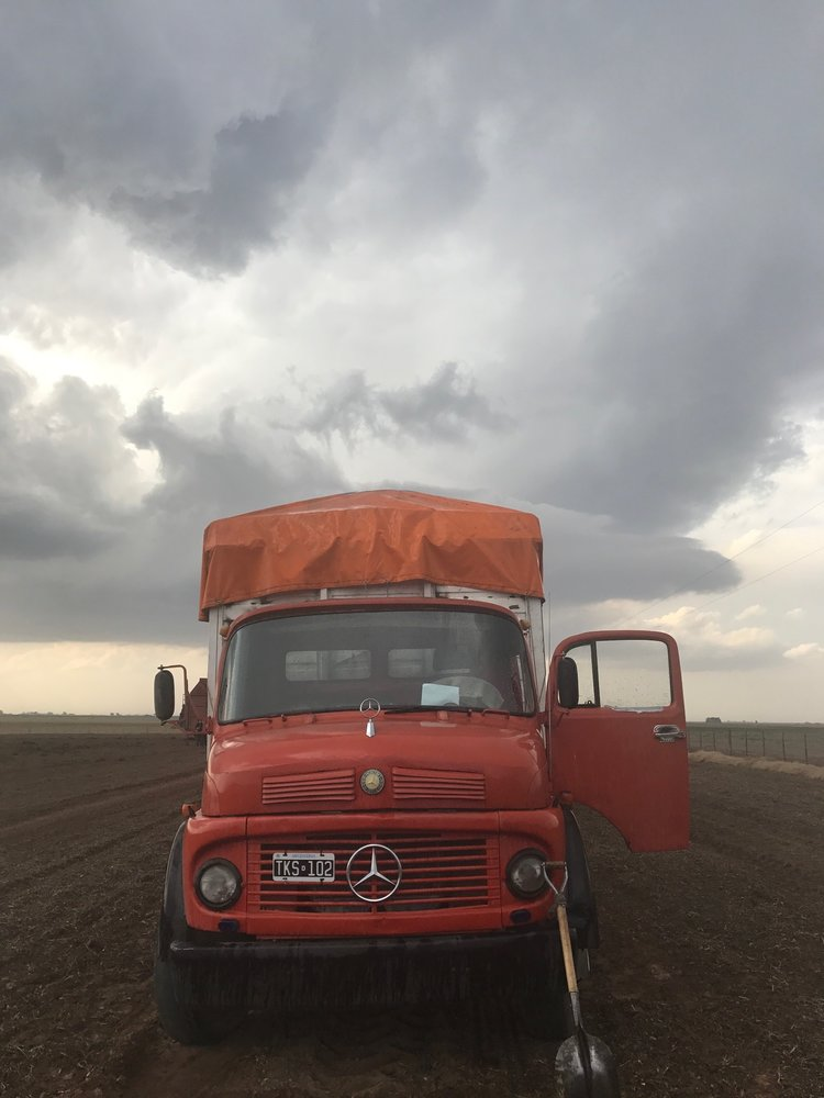 Peanut harvest Argentina