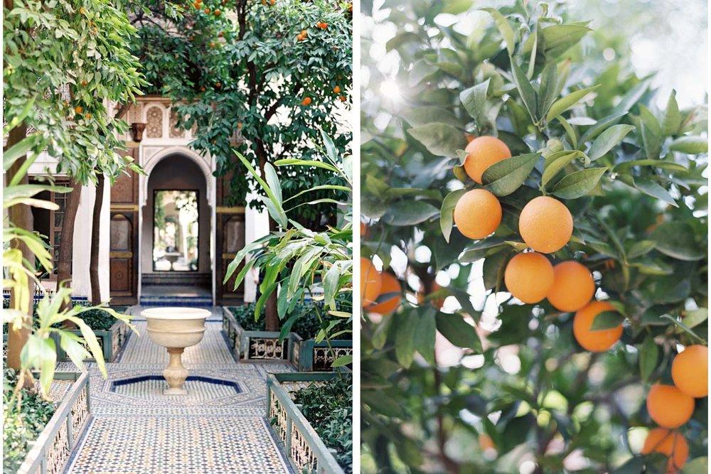 Morrocan courtyard and tangerine tree - DWDM