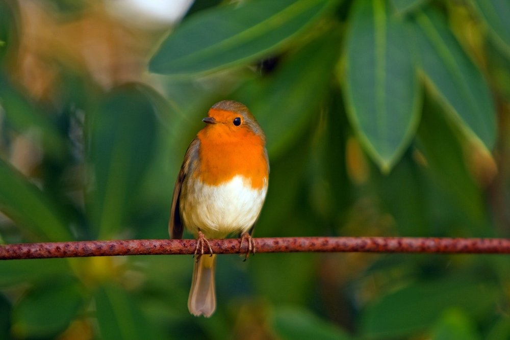 Robins, both bright and famous.