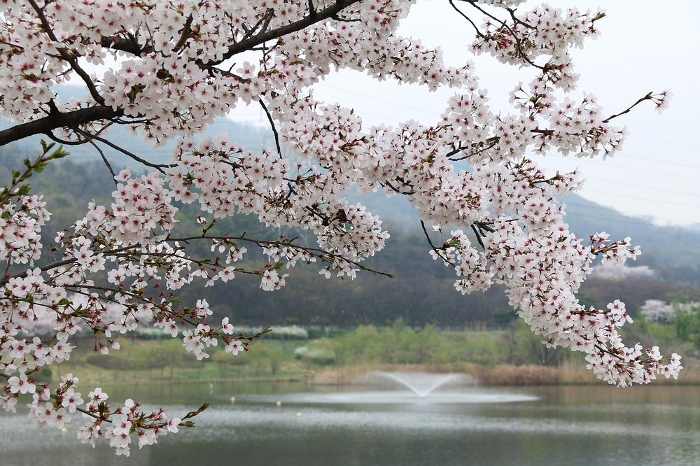 A blossoming tree is strong as well as beautiful, which is key to the concept of  grace.