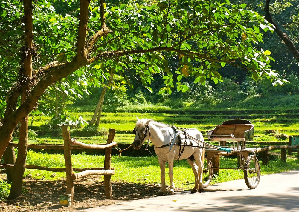 A horse and cart on a sunny day.
