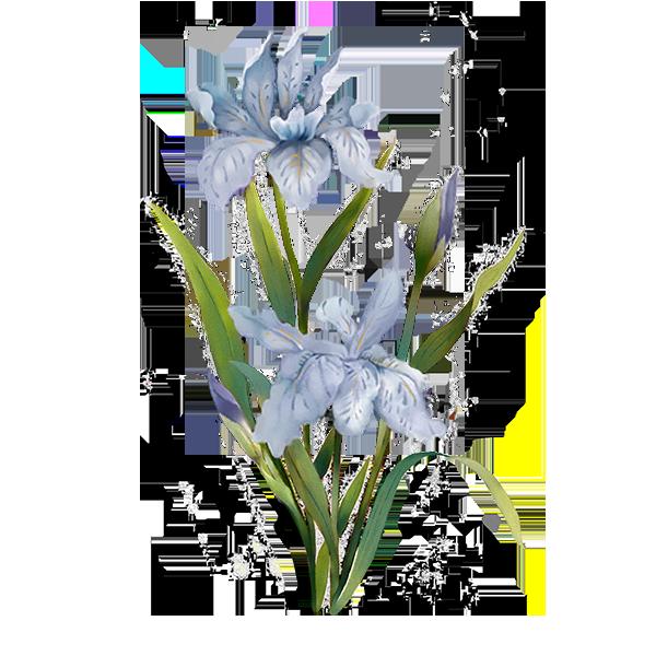 menu blue flower.png