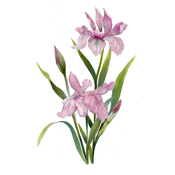 menu pink flower.png