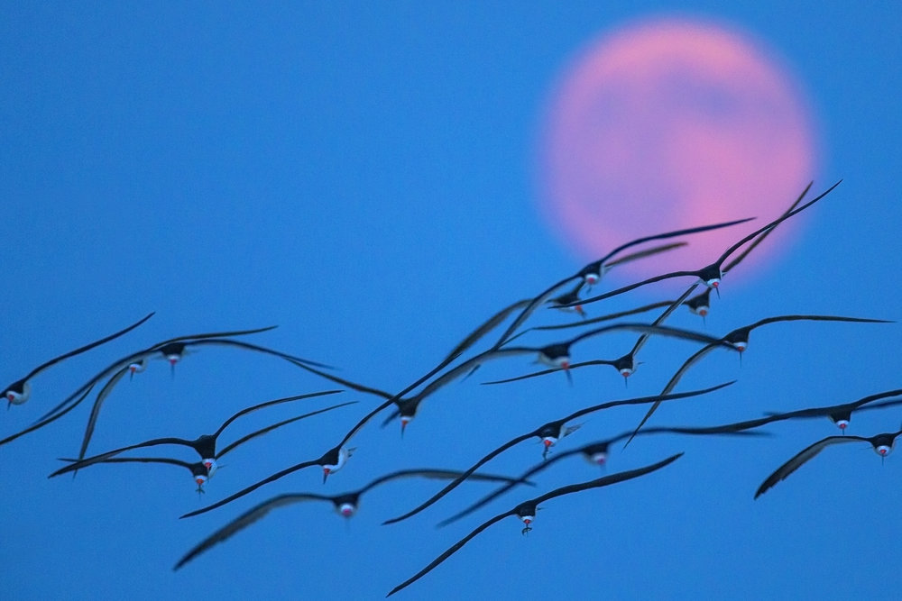 Flock of the moon.jpg