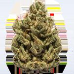 cannabis-Nug-bud-flower-california.png