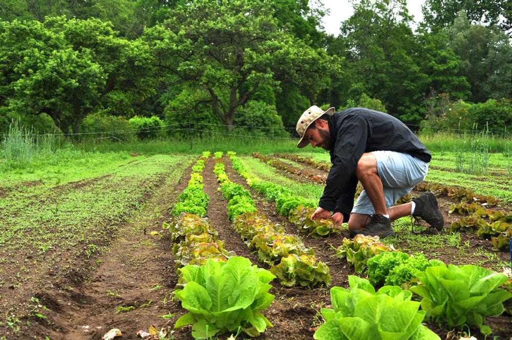 Organic/local farming