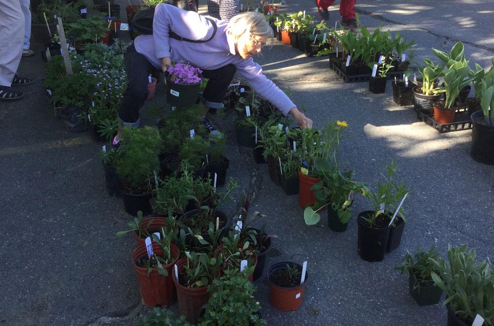 Longfellow Garden Club Annual Plant Sale