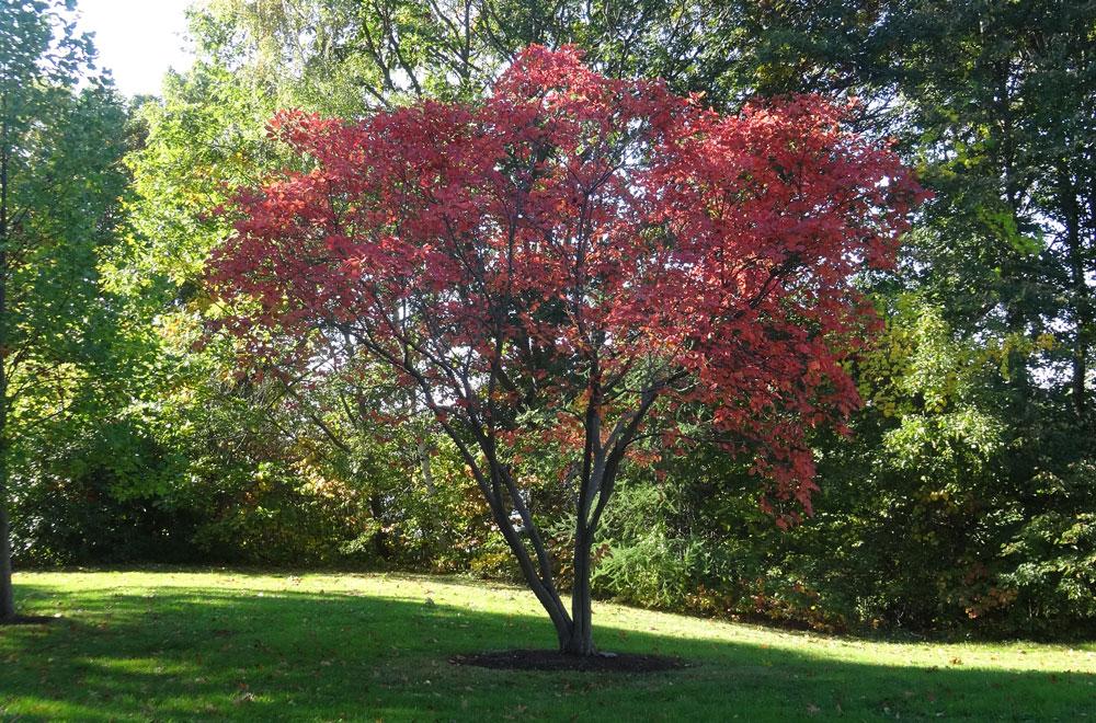 Longfellow Arboretum - Payson Park