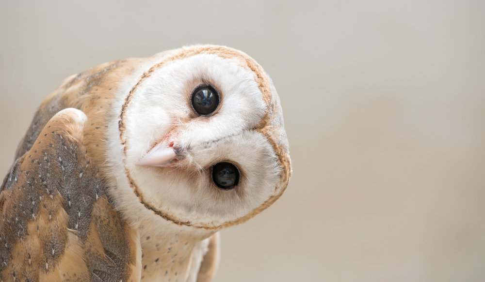 "What's with the Owl in your logo? - ""I get the Felis reference—black footed cats are the smallest, yet mightiest predators in the world...but what's with the Owl in your logo?"""