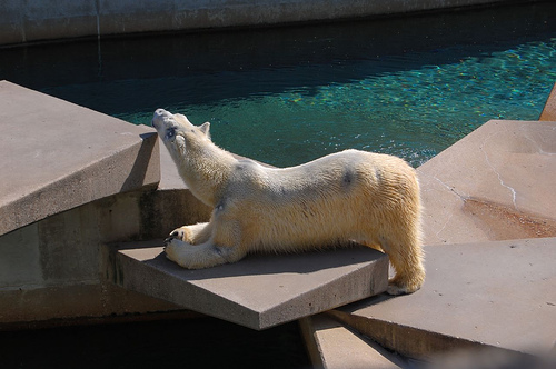 Old Polar Bear Exhibit