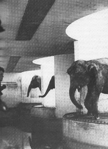 elephant-modern.jpg