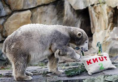 Happy Birthday, Knut!