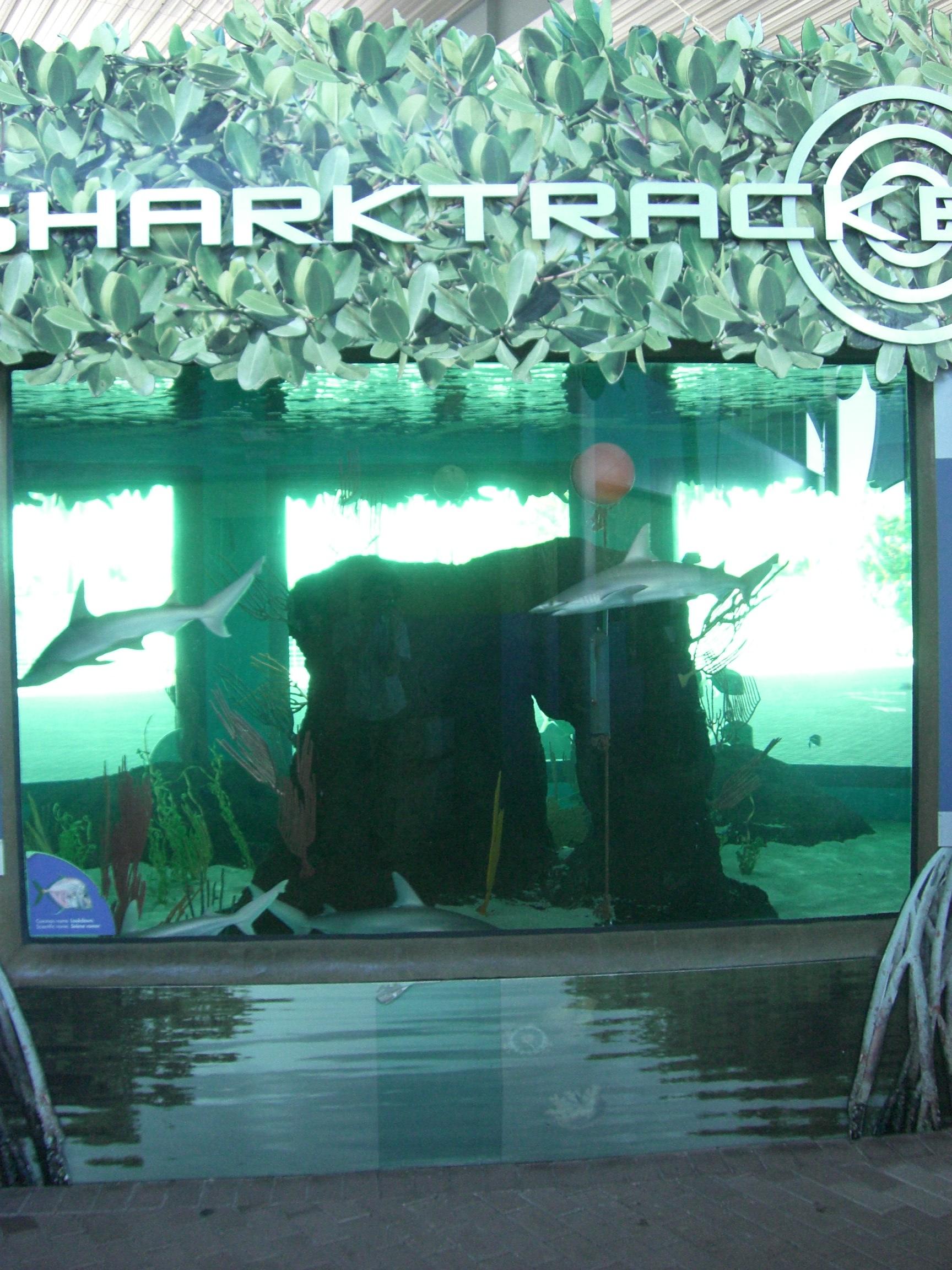 Smaller Shark Tank