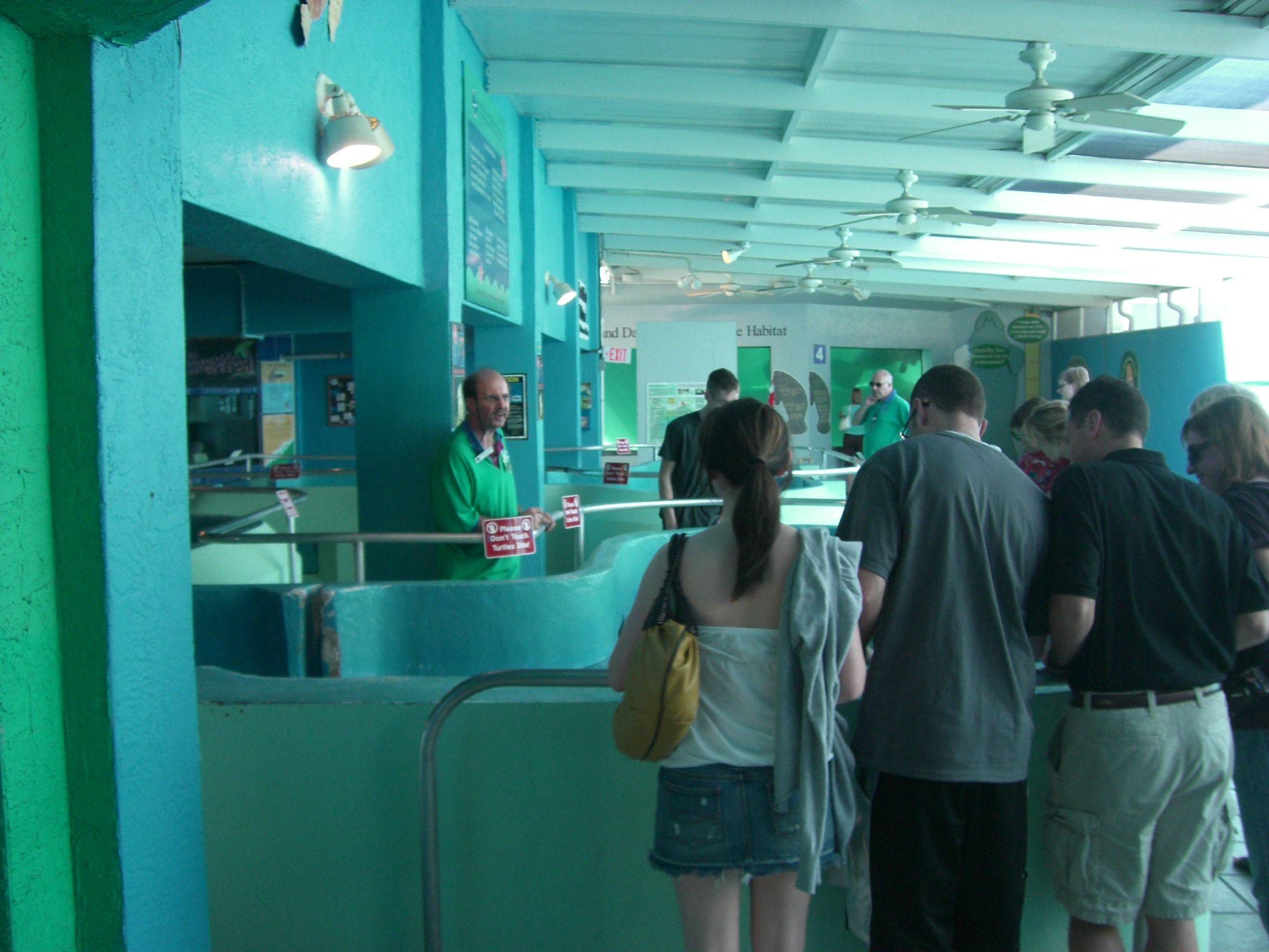 Sea Turtle Room