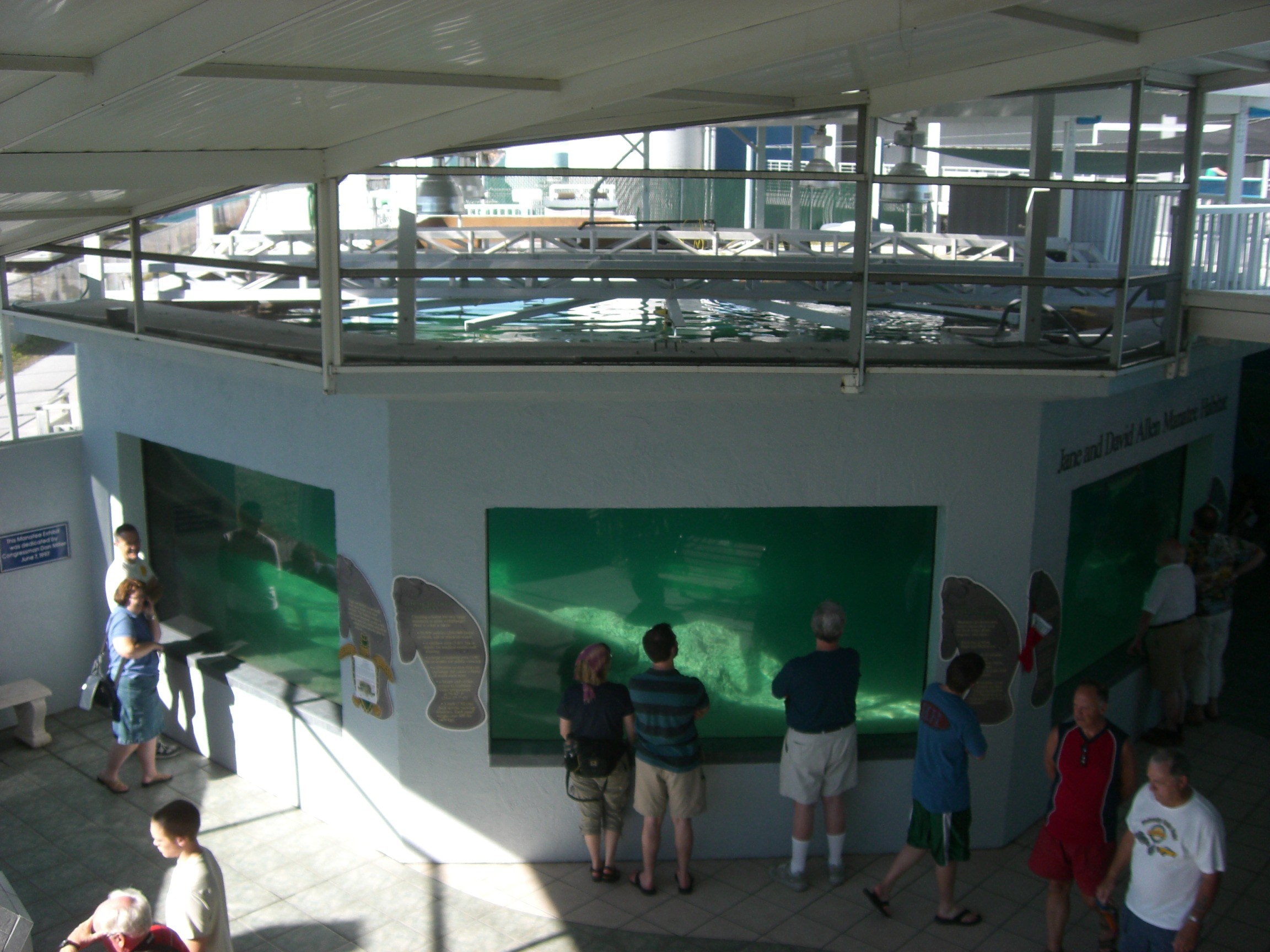 Manatee Exhibit