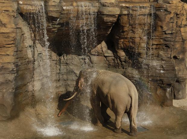 elephants-la.jpg