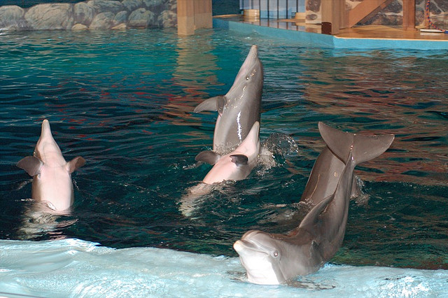 Indianapolis Zoo dolphin show by fourscompany_photos