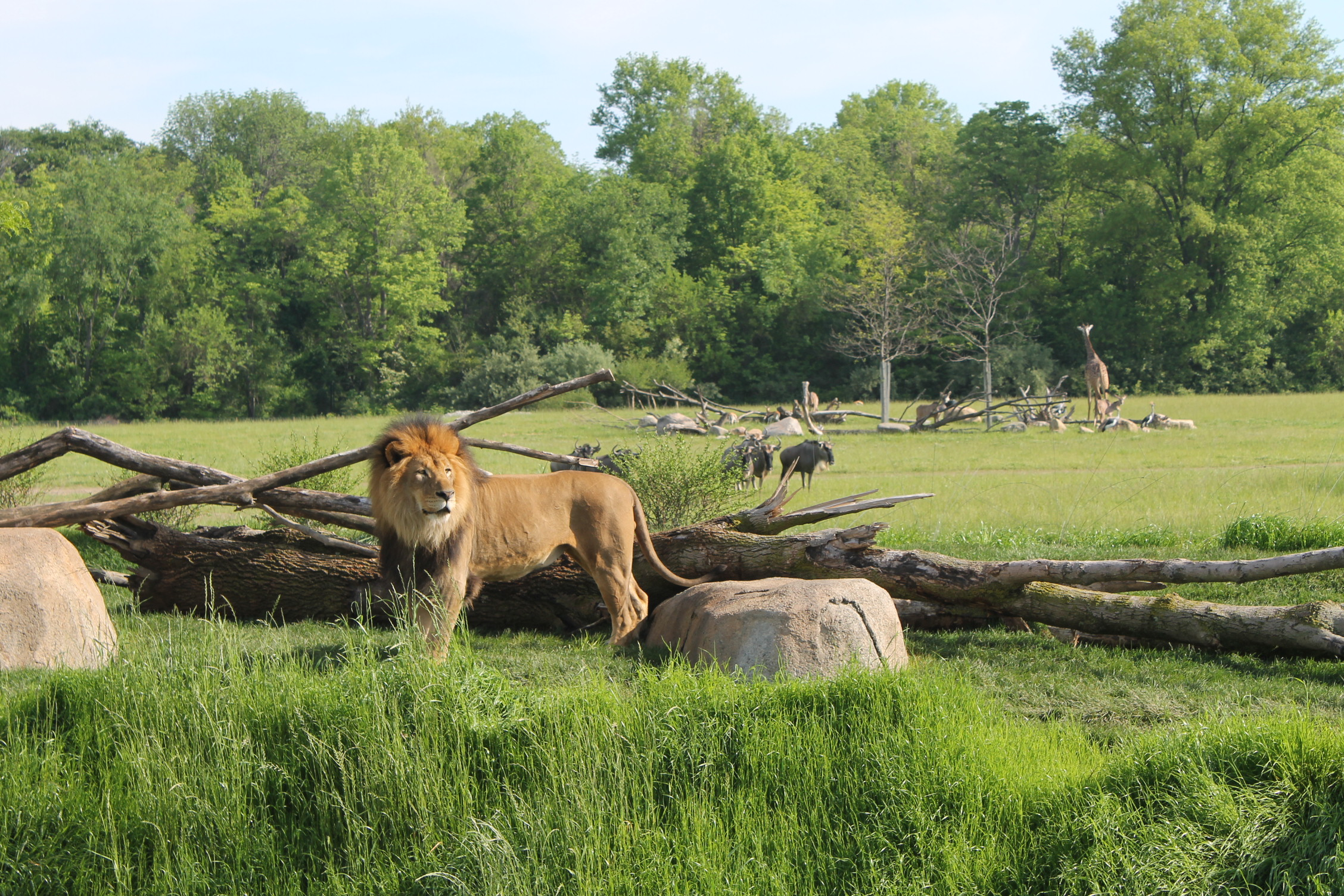 The view of the lion habitat and across the savanna beyond from the village plaza.