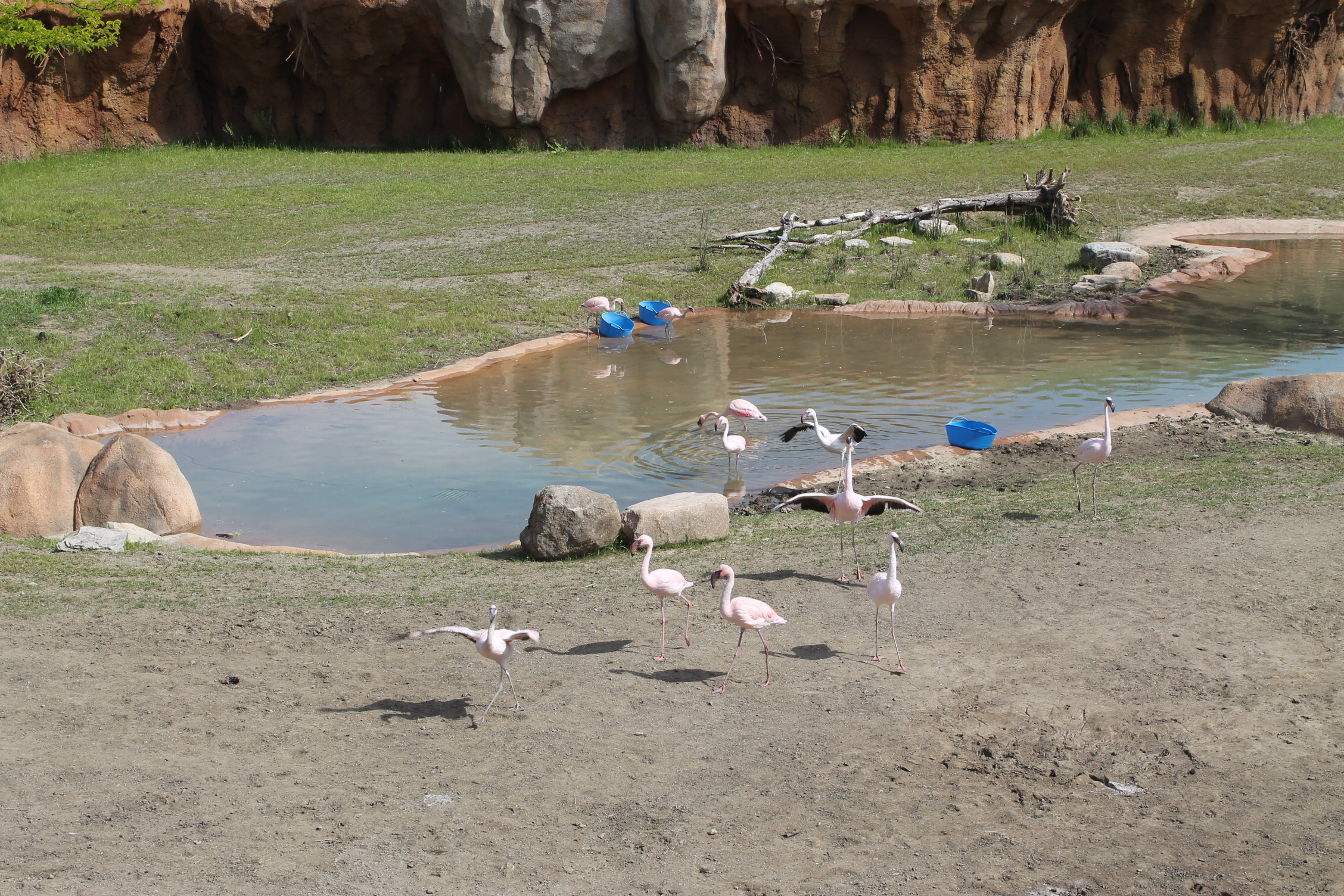 Watering hole later in the day: Flamingos