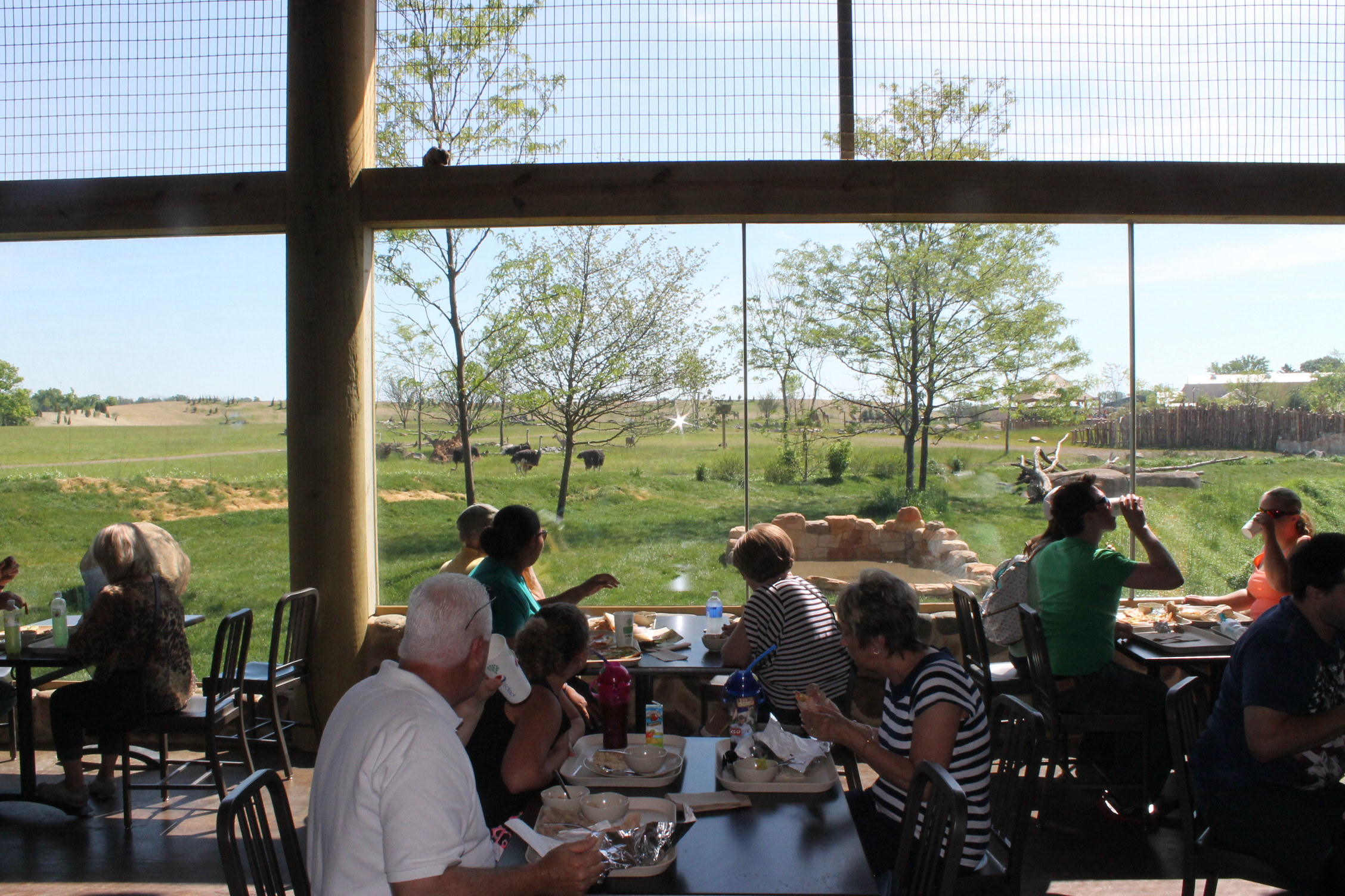 View from the restaurant to the lions and savanna beyond.