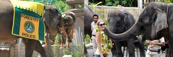 Elephant-show taman safari