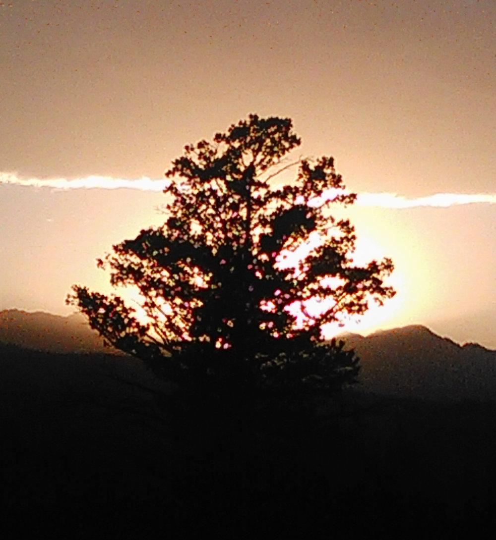 Tree Sunrise.jpg