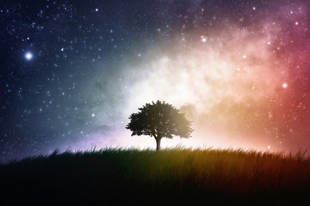 tree-in-field.jpg