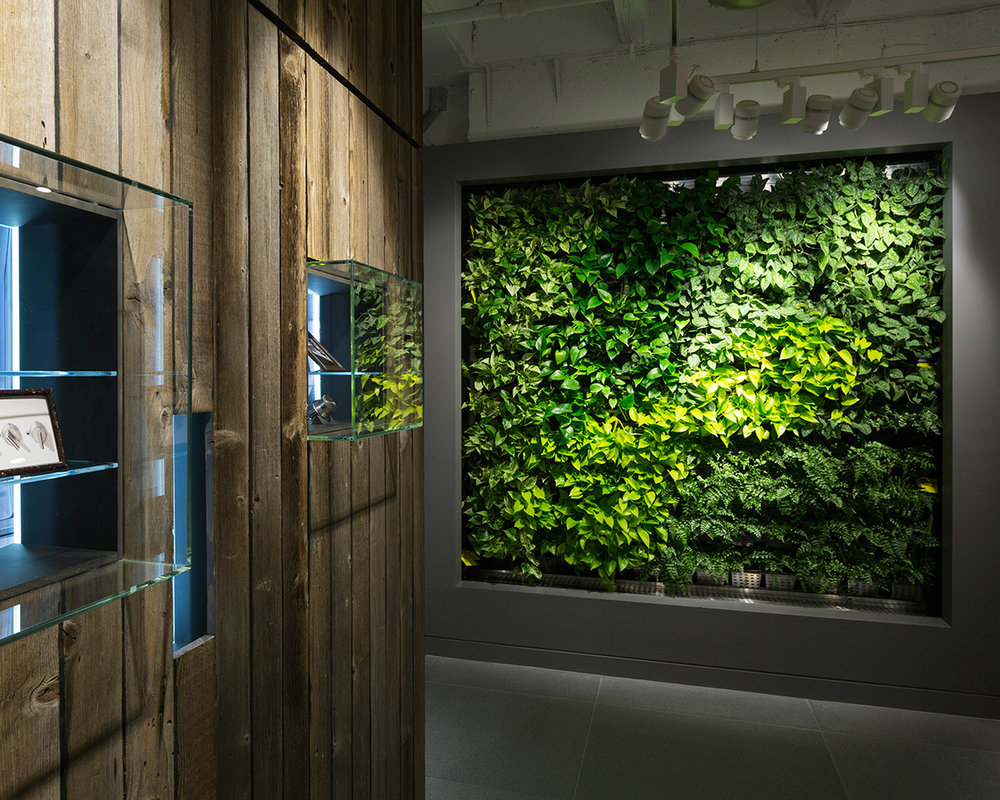 Living green wall and wooden panelled wall with glass shelving in the BSH Showroom located in New York. MEP provided by 2LS Consulting Engineering.