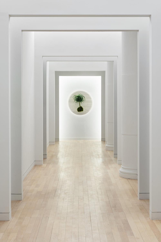 Parsley Health Hallway