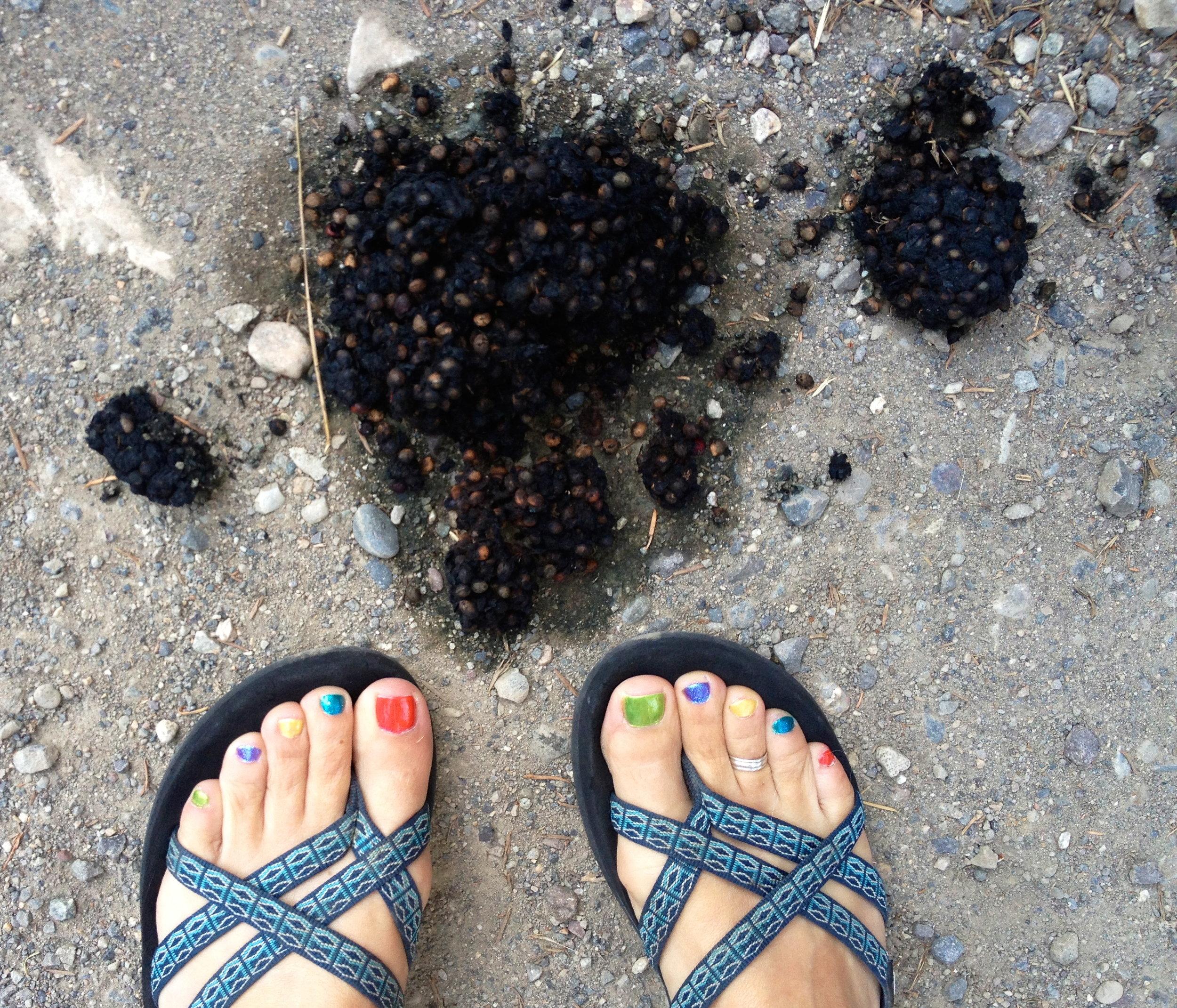 Bear Poop Commute