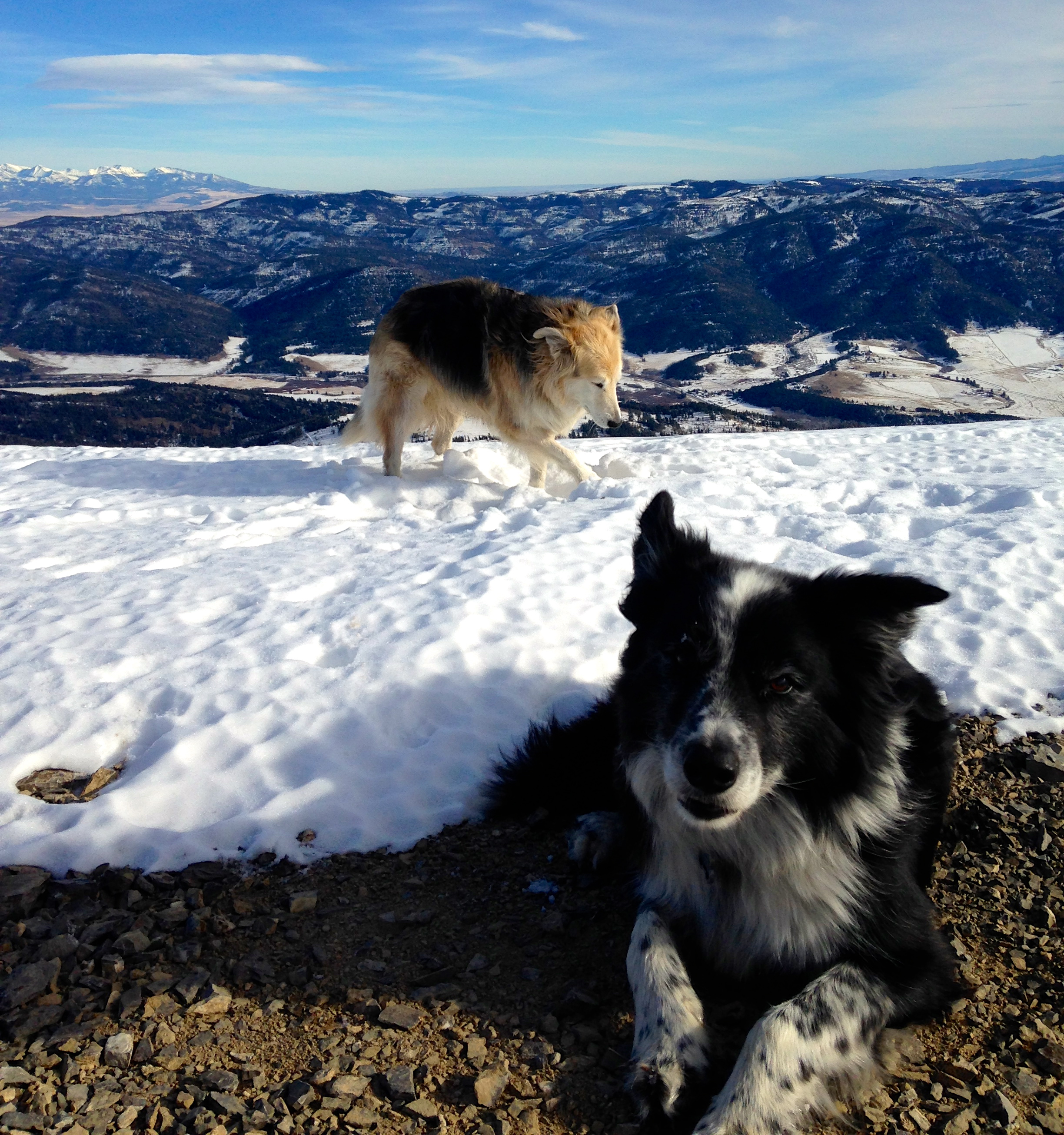 Happy dogs chill'n on the summit.