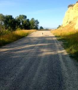 Zaydee trailing behind me while on a morning run along the Yellowstone River