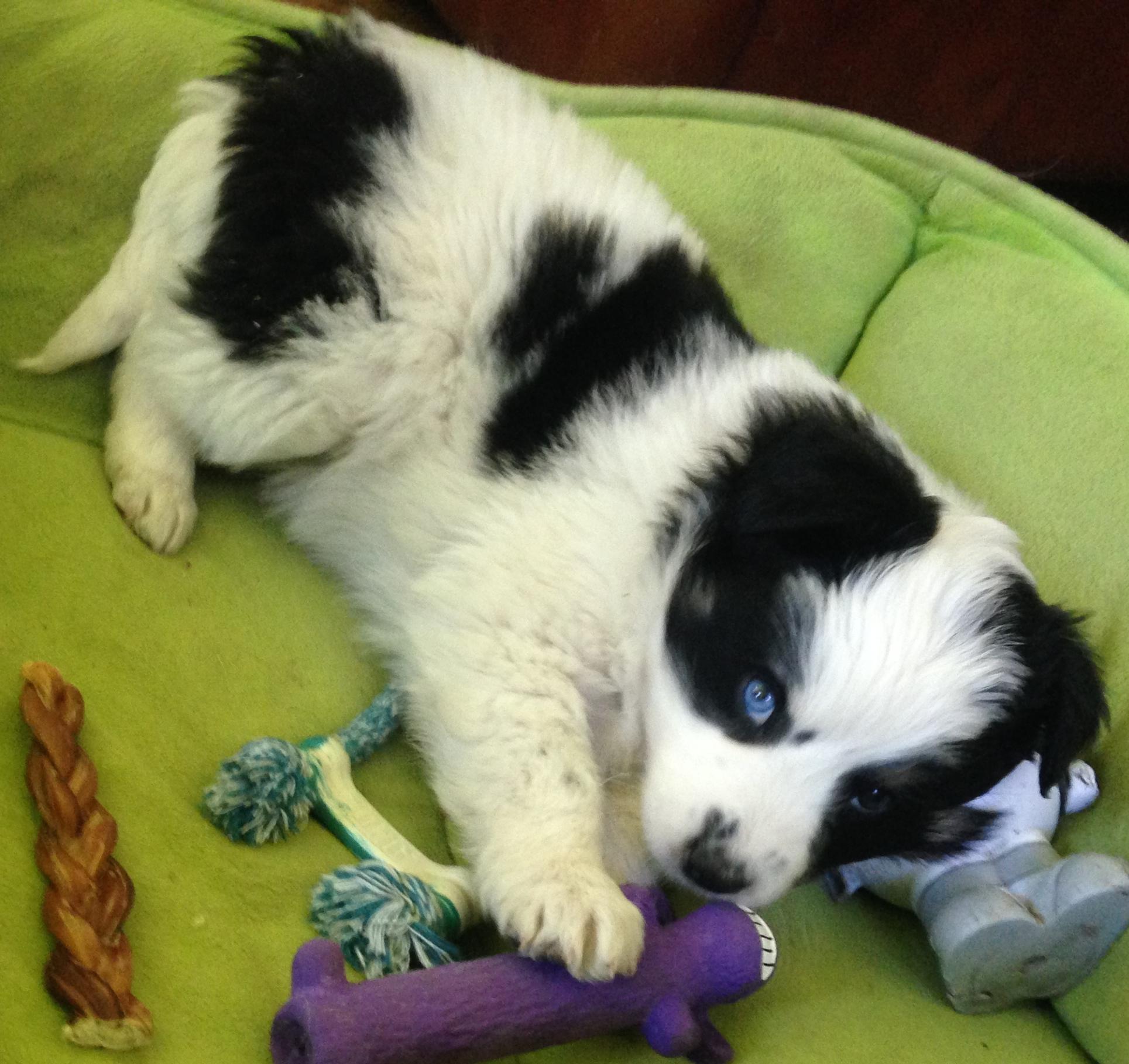 Blue eye baby