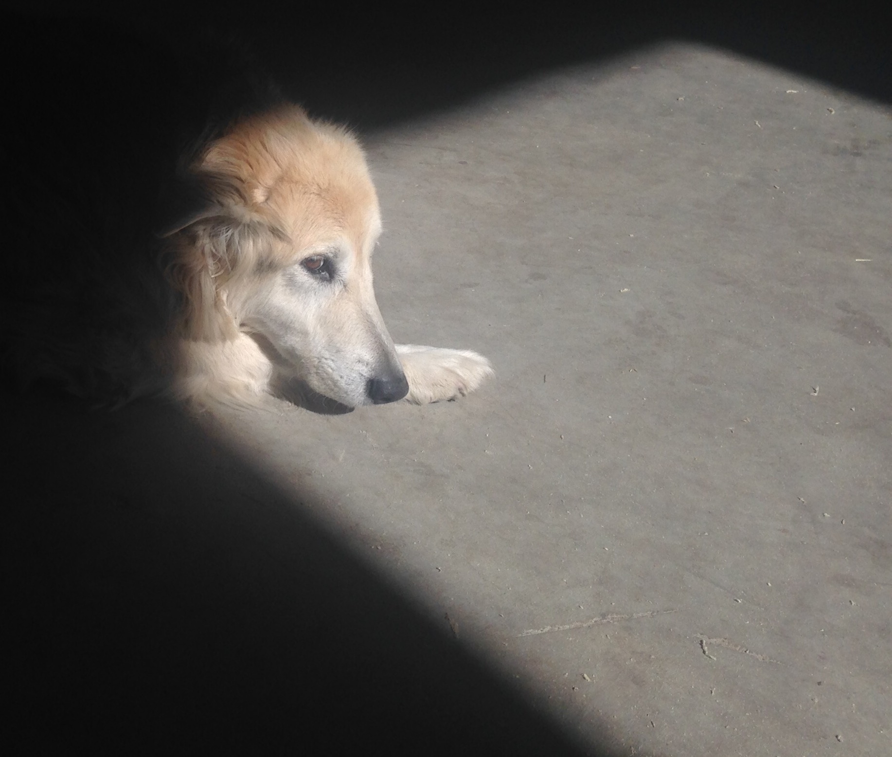 Zaydee sunning her face while laying on the studio floor (taken in autumn)