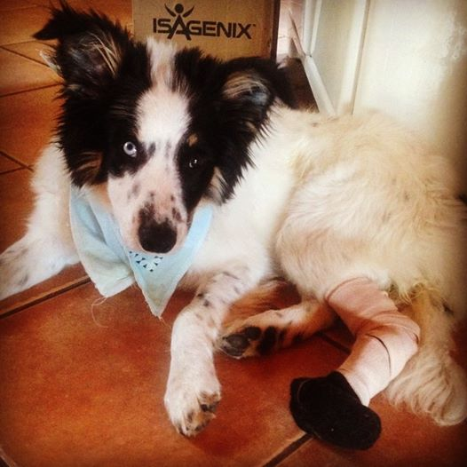 Tala on the road to recovery