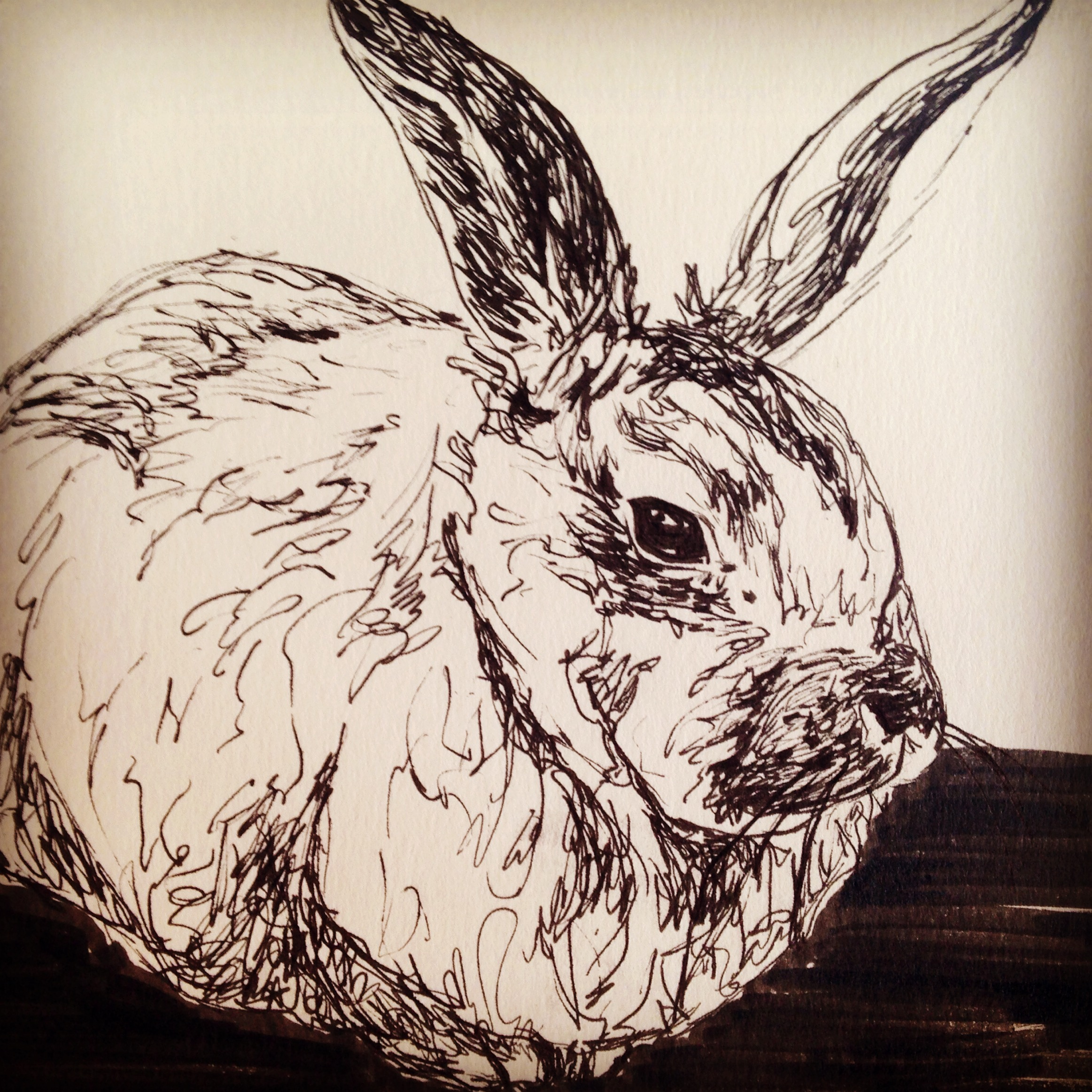 My artist friend Adonna sent a photo of her adopted bunny so I drew it.