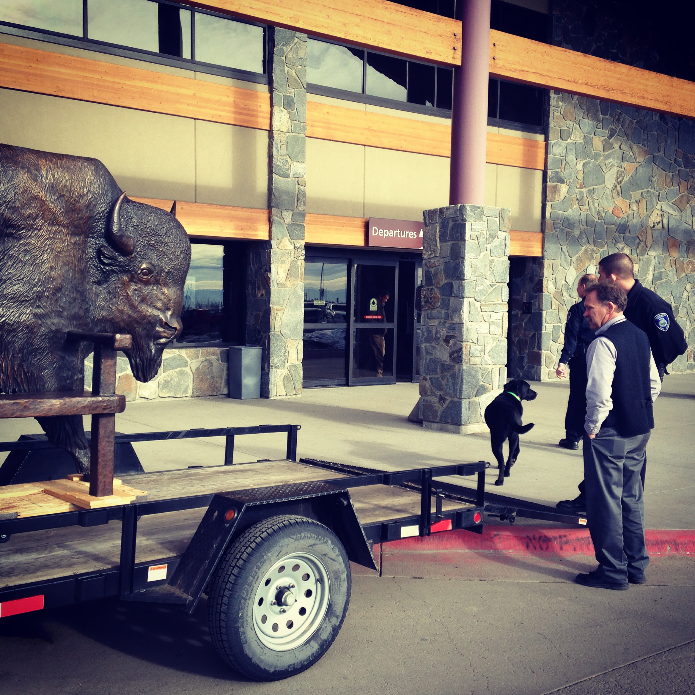 Preparing to unload my bison at his new home