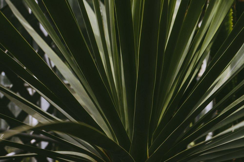 botanical-bright-cactus-175245.jpg