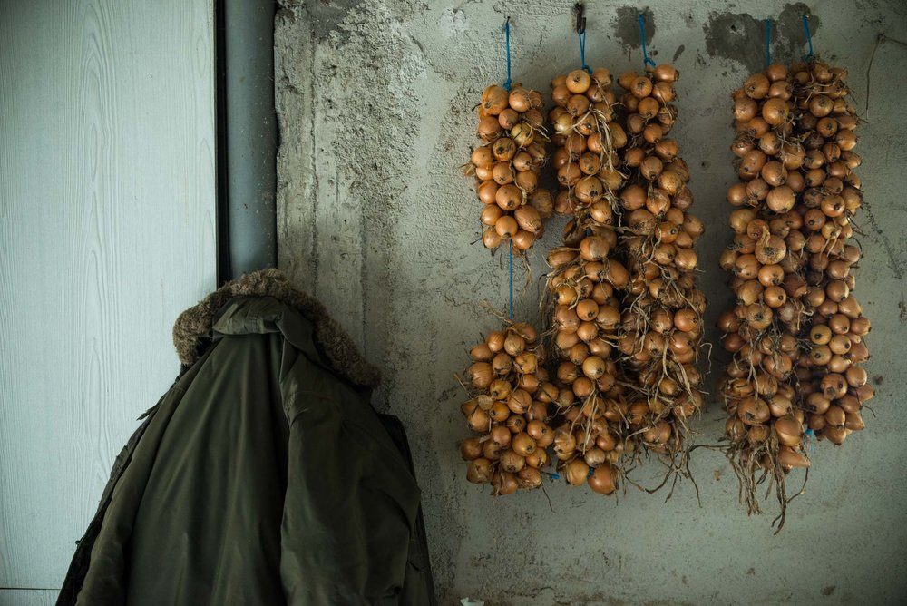 Onions left to dry in the apothecary.