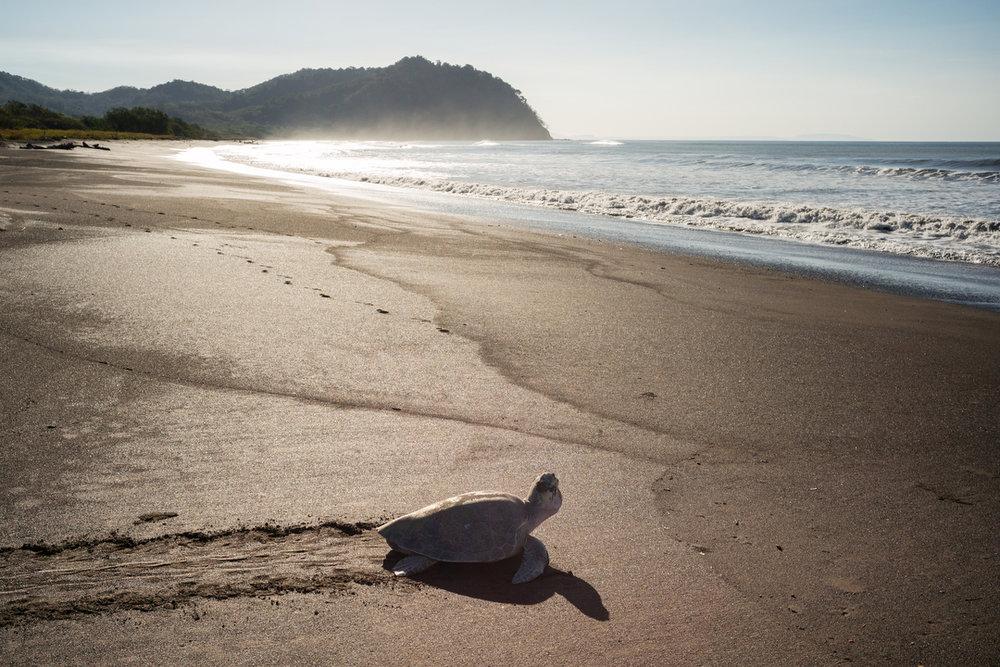 Sea turtle refuge