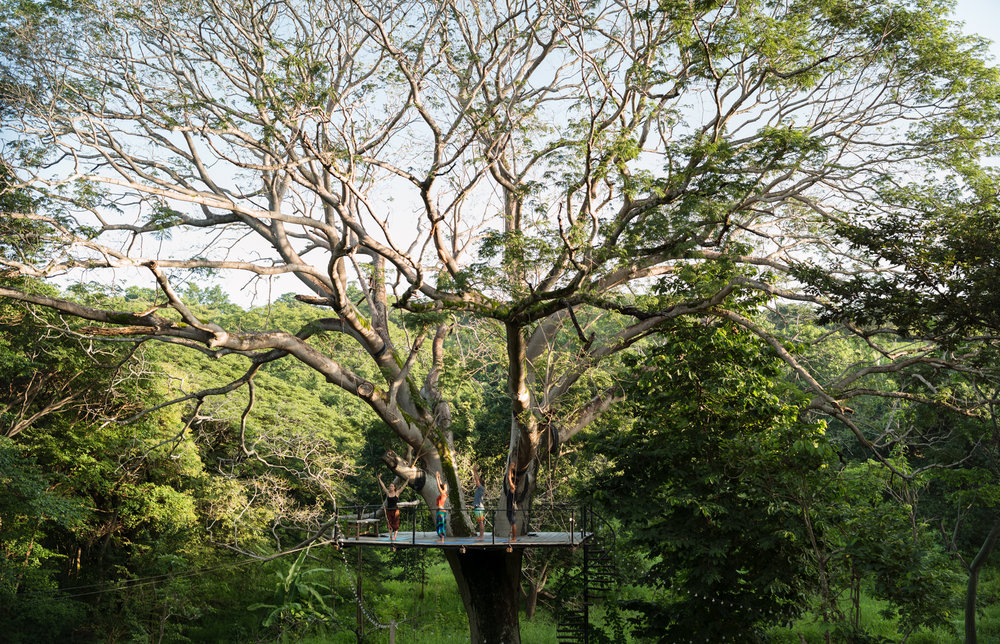 on a platform suspended in the rainforest canopy,