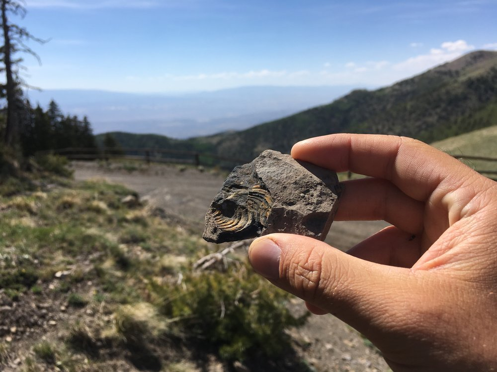 a marine fossil at the top of a mountain in Utah