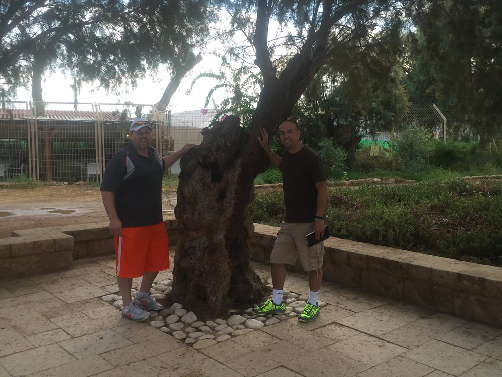 Luke and I discovered a Sycamore Tree… the kind that Zacchaeus climbed in   Luke 19  .