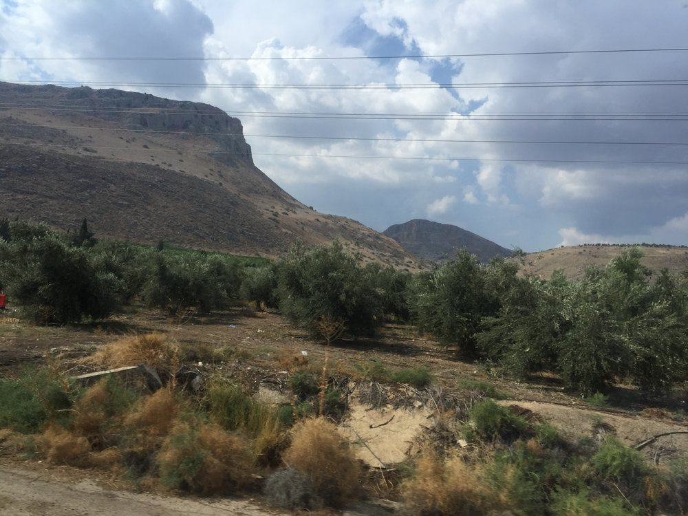 Israelis planted these trees in Galilee over the spot where Jesus fed the 5,000.